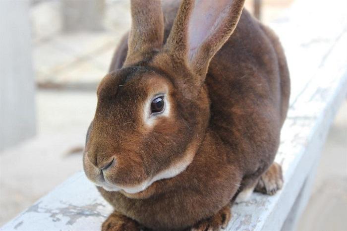 коричневый плюшевый кролик