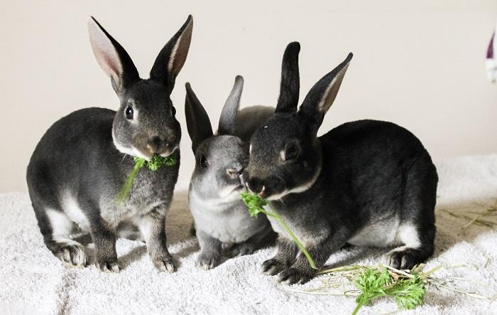 кролик ест ботву