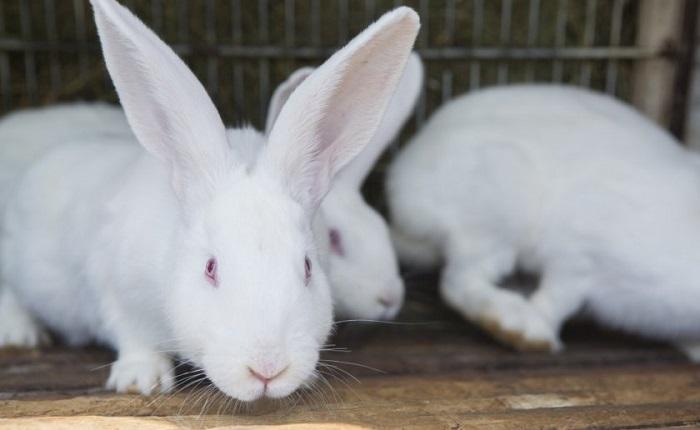 профессиональное фото кроликов
