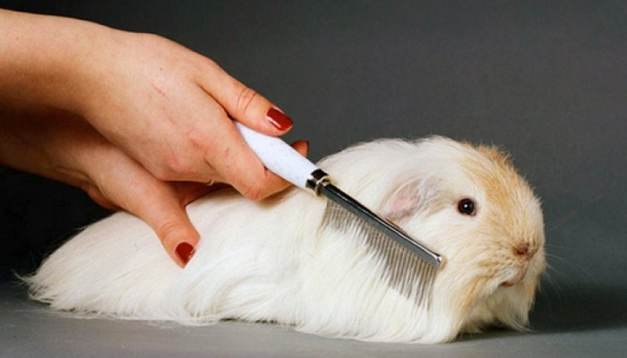 расчесывание кроликов