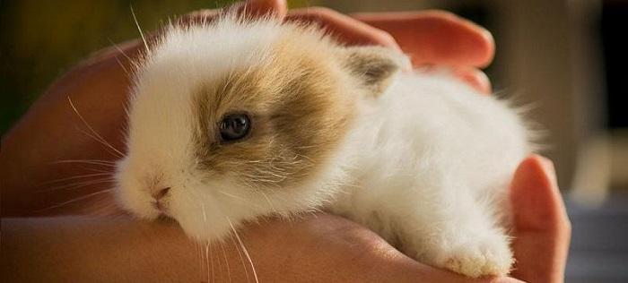 маленький кроль в руках