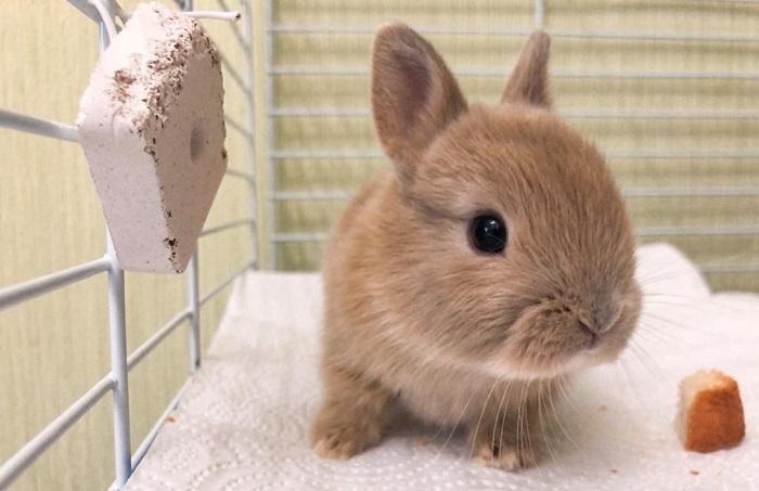 чистый кролик