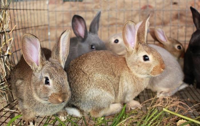 маленькие коричневые кролики
