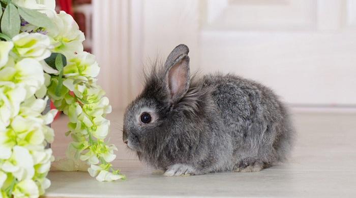 маленький кролик с цветами