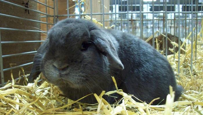 кролик в соломе