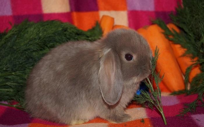 кролик ест морковь