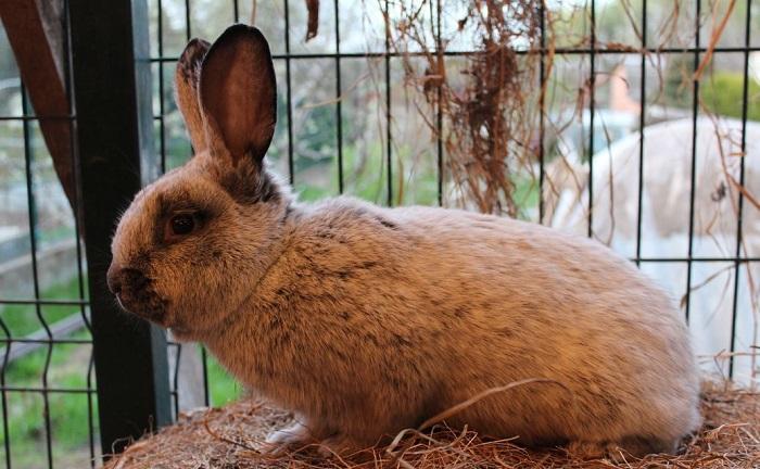 кролик бсс в клетке