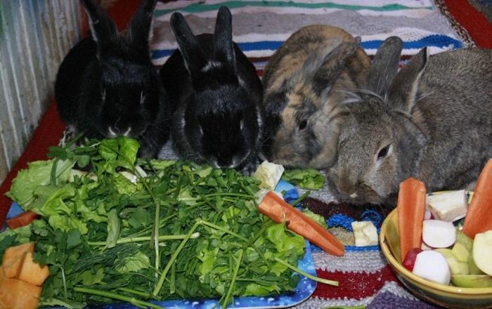 Питание кроликов картинки