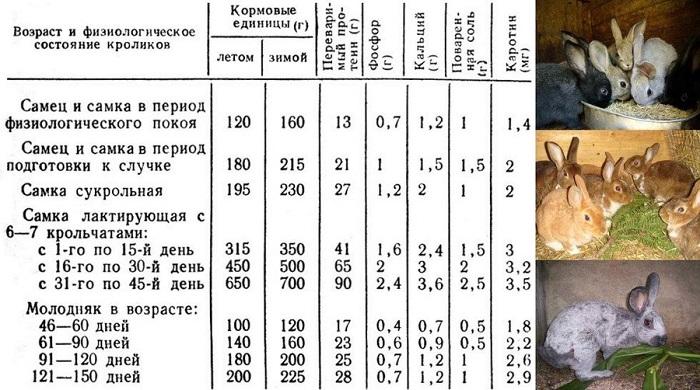 Таблица питания кроликов