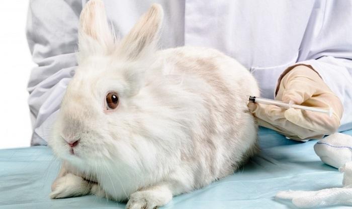 уколы кроликам