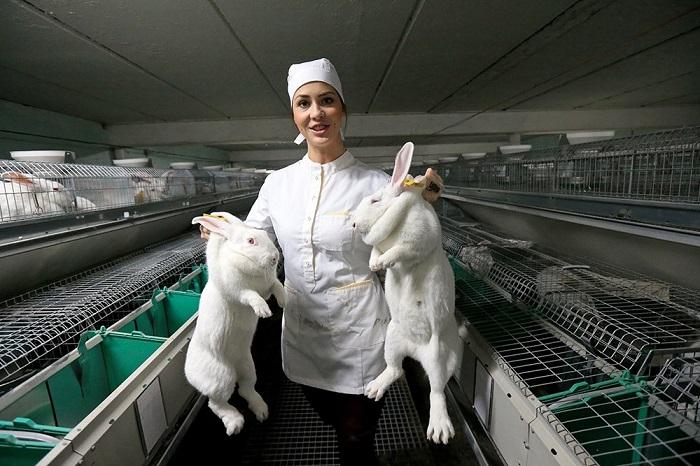Фото кролиководческого хозяйства