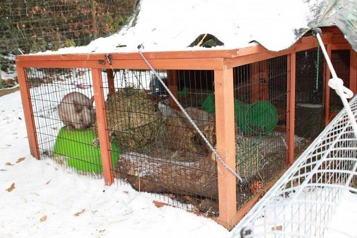 зимний вольер для кроликов
