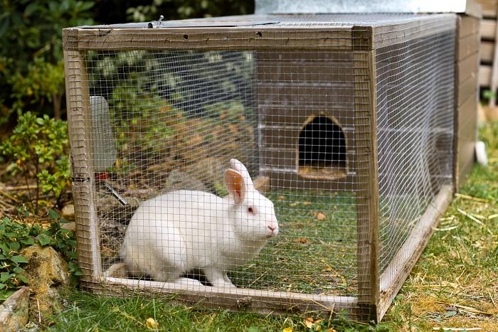 Домашний кролик в клетке фото