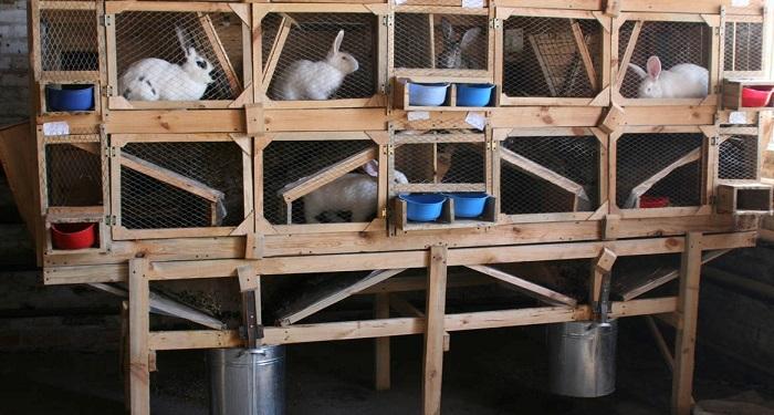 Клетки для кроликов картинки