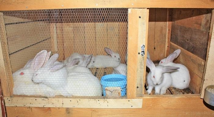 Домашняя кроликоферма