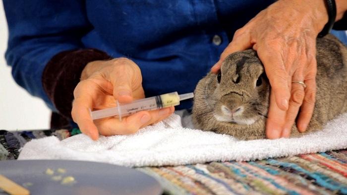 Ветеринария кролики