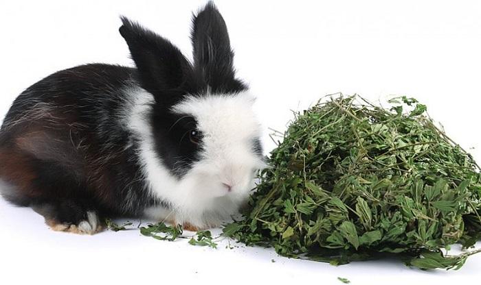 можно ли кормить кроликов