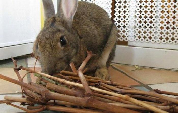 Веточный корм для кроликов зимой