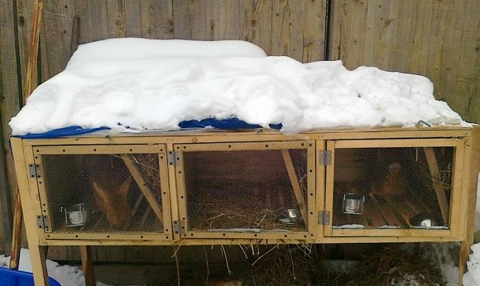 Зимние клетки для кроликов