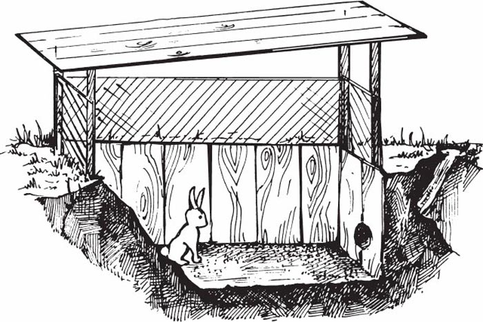 Вольер для кроликов рисунок