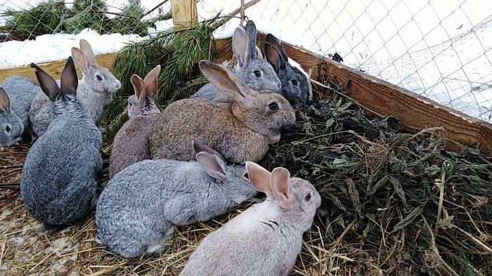 кролики в вольере зимой