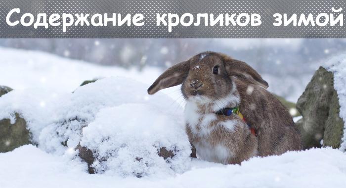 зима, снег, кролик.