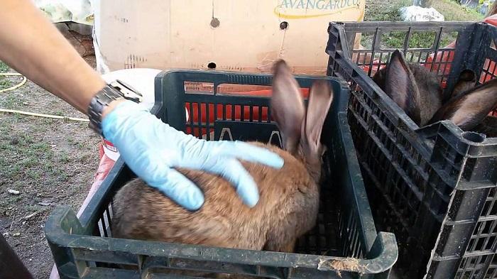 кроликов помещают отдельно
