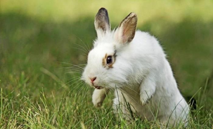 кролик прыгает