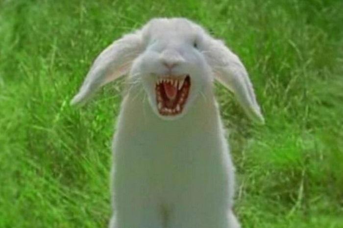 Злой белый заяц