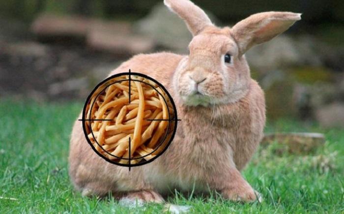 От глистов кроликам профилактика
