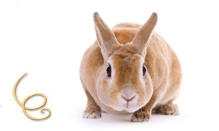 кролик и гельминт