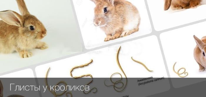 Глисты у кроликов: симптомы, лечение и профилактика