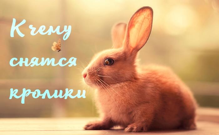 , к чему снятся кролики