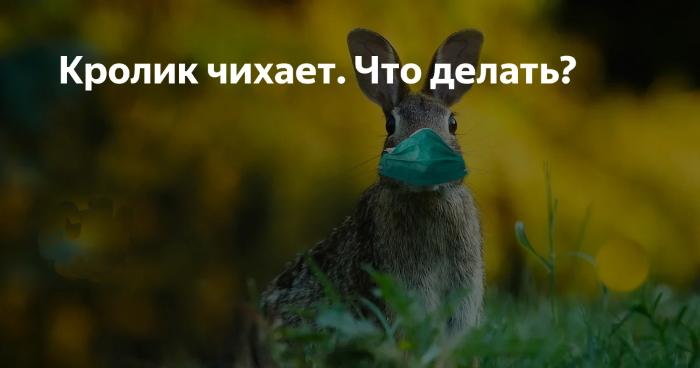 Кролик чихает. Что делать?