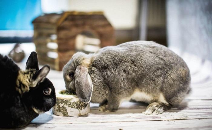 Кормление кроликов во время чихания