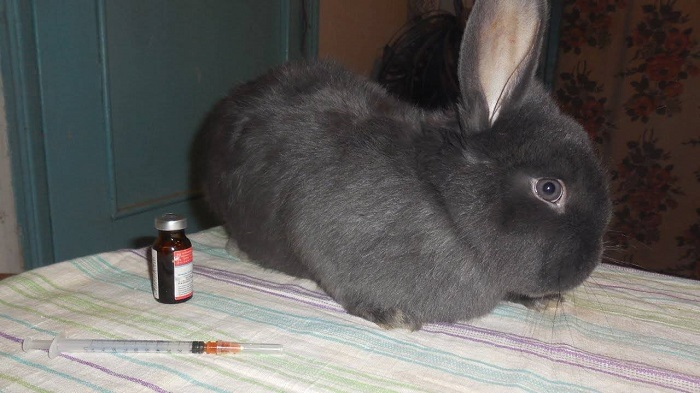 шприц и кролик