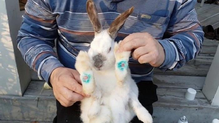 Пододерматит у кролика
