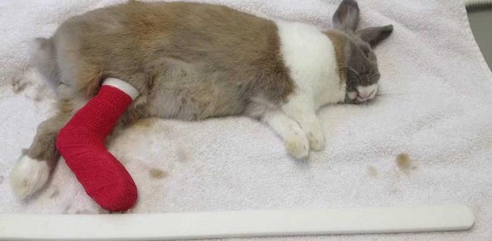 обработанная лапа кролика