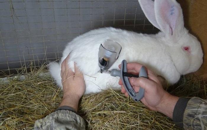 Чем лечить понос у кроликов