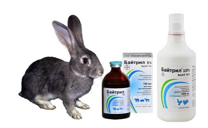 Лекарство для кроликов