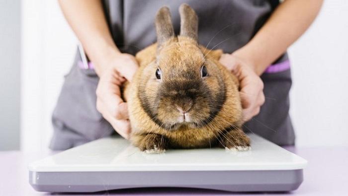 массаж животика кролика