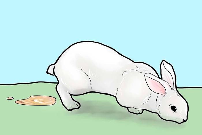 понос у кролика.