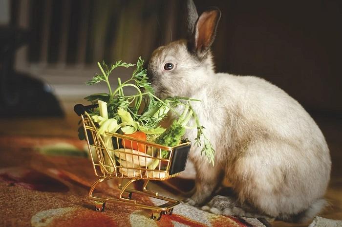 продуктовая корзина кроликов