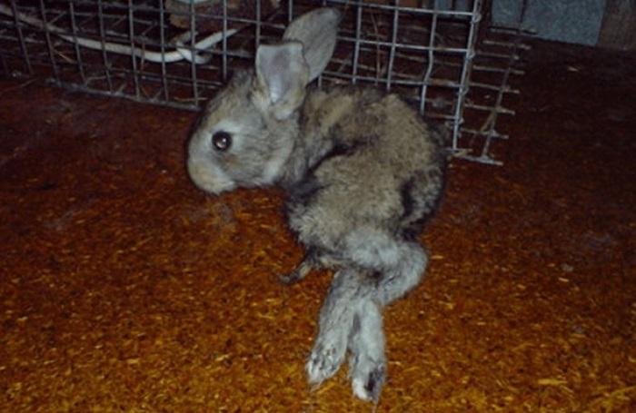 маленький кролик отказали лапы