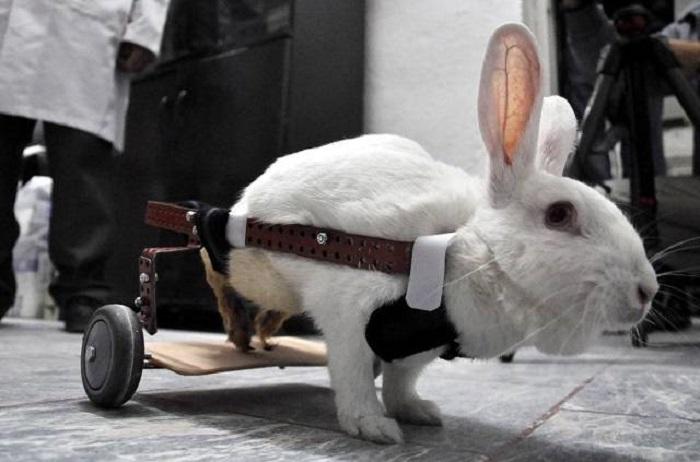 кролик на ходулях