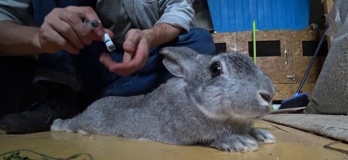 Паралич лап у кроликов от испуга