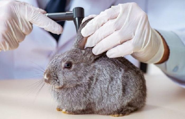 Средства от ушной чесотки для кроликов