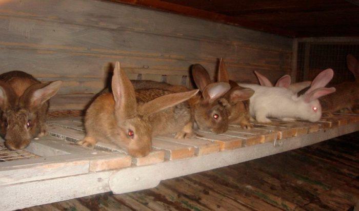 кролик фландр клетка