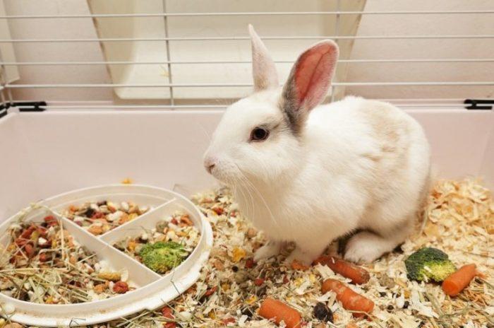 рацион кролик