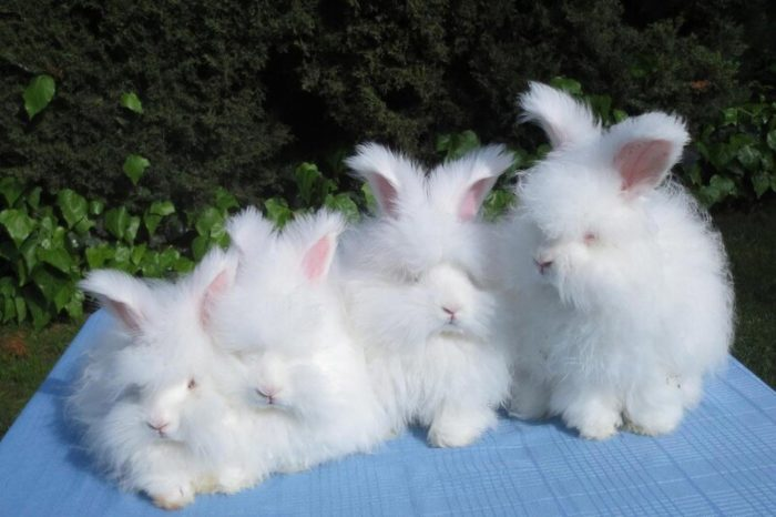 Потомство кроликов